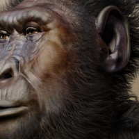 Evoliucijos psichologija