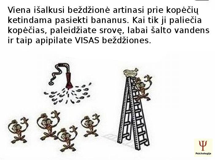 socialine-itaka-2
