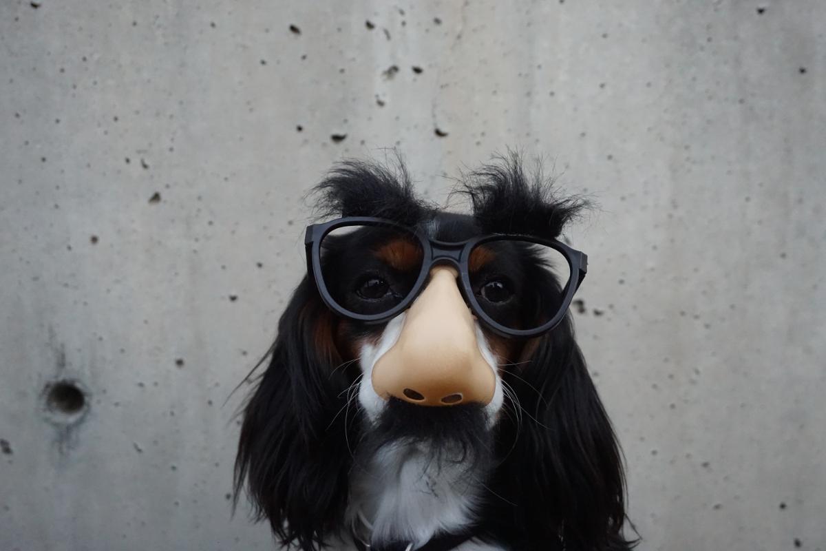 suo-akiniai