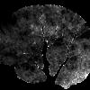 Neuromokslai