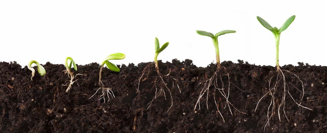 augimas