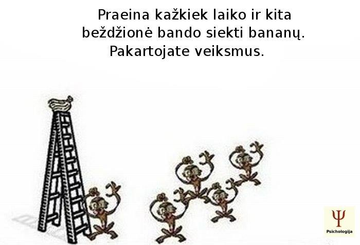 socialine-itaka-3