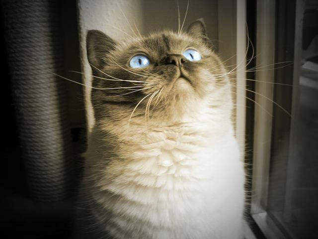 cat-604046_640
