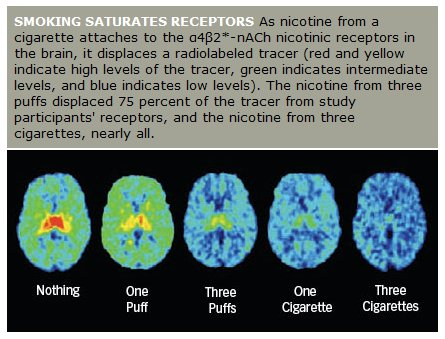receptor_saturation