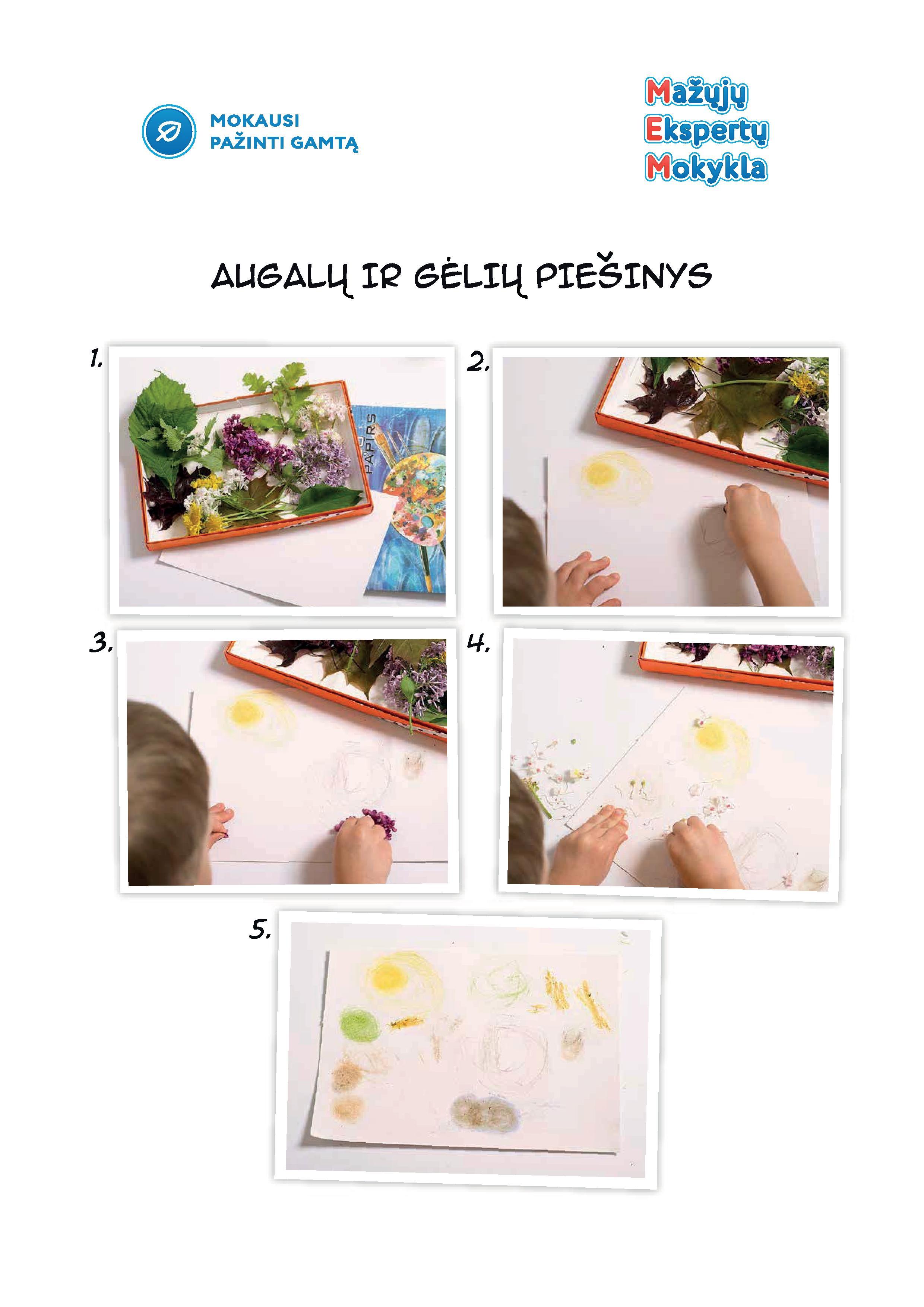 augalų ir gėlių piešinys