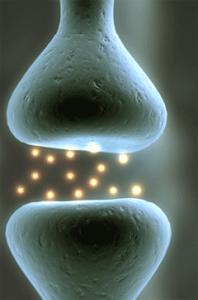 neurobiologija